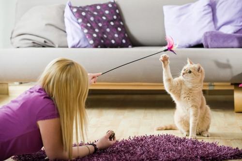 猫じゃらしで女性と遊ぶ猫