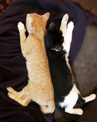 背中をくっつけて寝る2匹