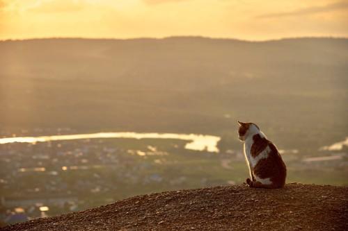1匹で佇む猫