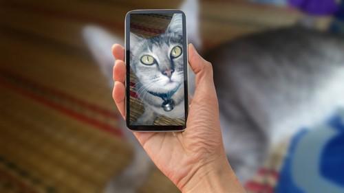 スマートフォン越しの猫