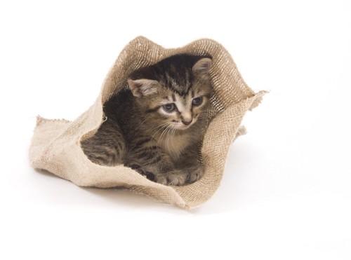 麻袋の中に入る子猫