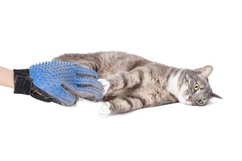 ミトン型のラバーブラシと寝転ぶ猫