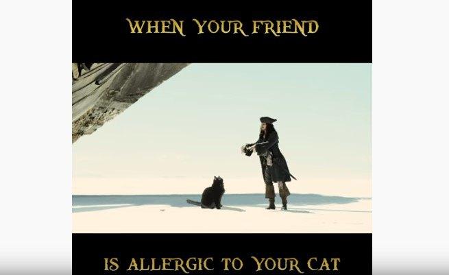猫を追い払う