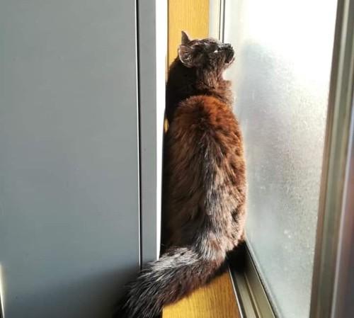 社長室の窓辺にいるおさむ
