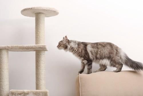 ソファーの背もたれからタワーを見つめる猫