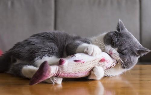 玩具を噛む猫