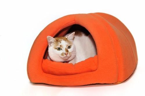 オレンジ色の猫ドームに入る猫