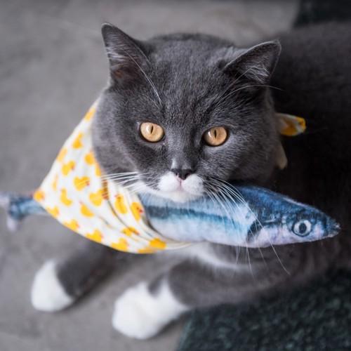 魚を持つ猫