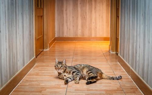 玄関前で寝転がる猫