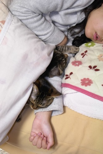 飼い主の腕枕で眠る二匹の猫