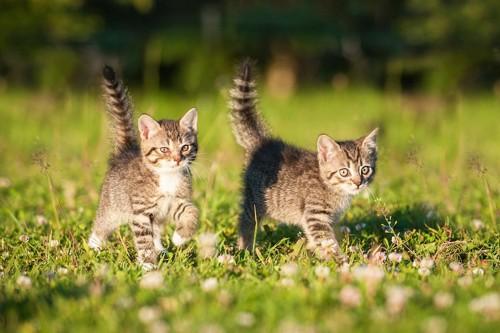 草原を走る二匹の子猫