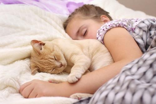 子どもと寝るクリーム色の猫