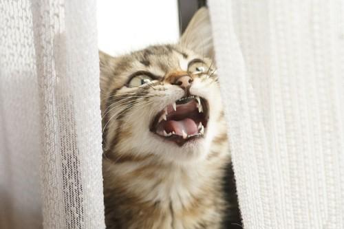不安で鳴く猫