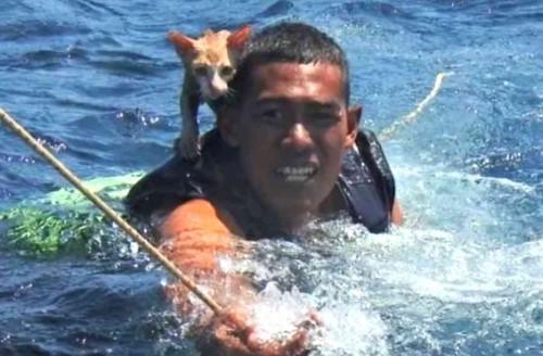 猫をのせ泳ぐ海兵隊員
