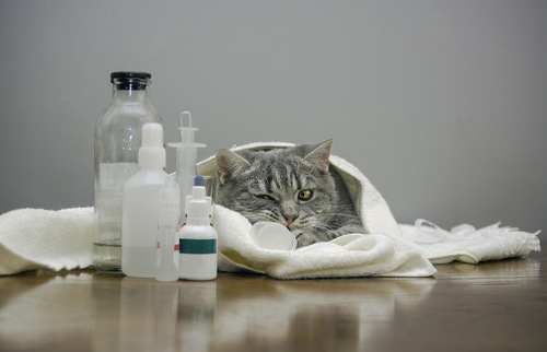体調不良な猫