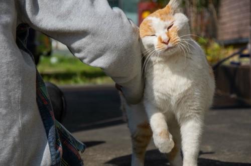 匂いをつける猫
