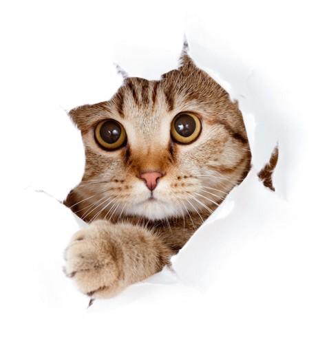 破れた穴から顔をのぞかせる猫