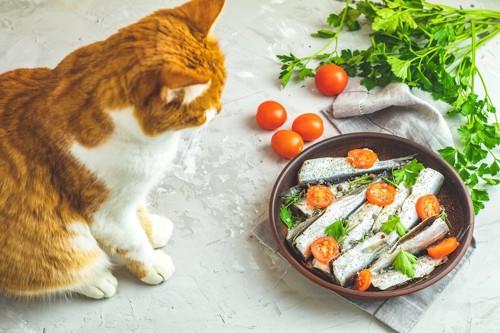 鰯を使った料理を見つめる猫