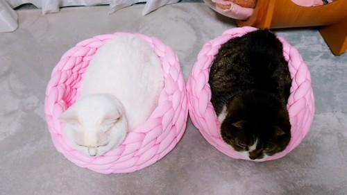 上から見たベッドに入る同じ姿勢の2匹の猫