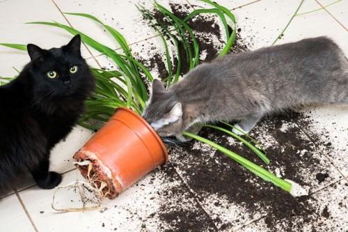 倒れた鉢植えと2匹の猫