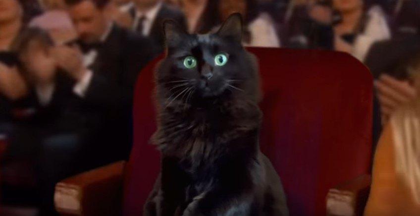 発表を待つアウル・キティ