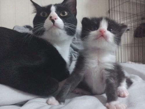 シロと子猫