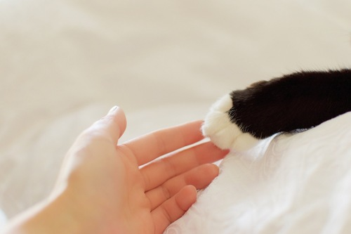 手を繋ぐ猫