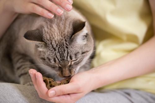 女性の手からごはんを食べる猫