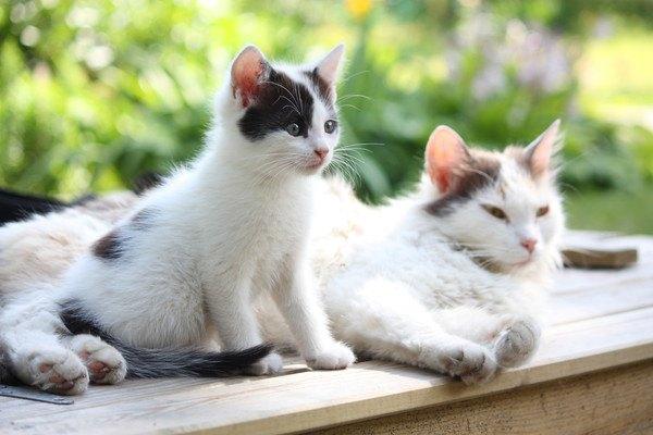 可愛いらしい子猫と隣にいる母猫