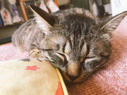 寝ているつばき
