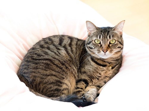 布団にすっぽり収まっている猫