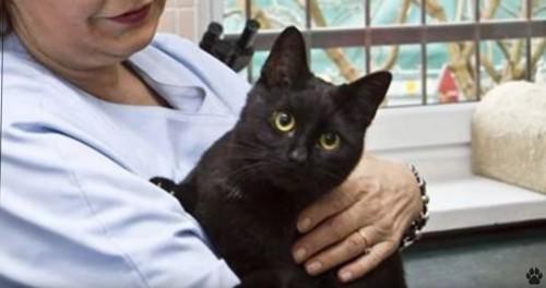 抱っこされる黒猫