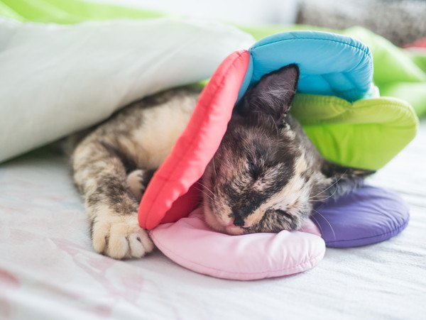 布のエリザベスカラーを付けて寝る猫