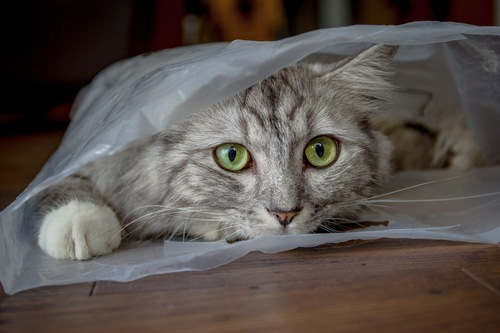 ビニール袋の猫