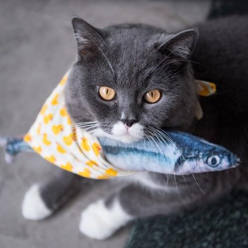 魚泥棒の猫