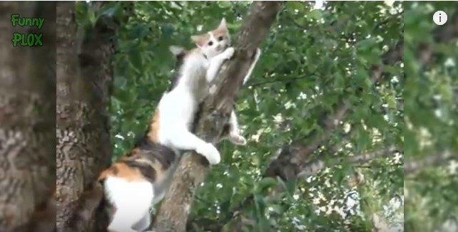 子猫の救出