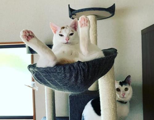 キャットタワーにてとってもくつろぐ猫
