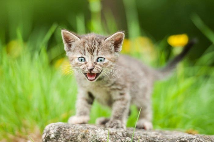 外で鳴いている子猫