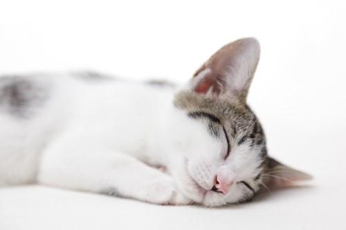 笑顔で眠る猫