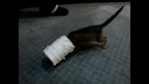 頭にトイレットペーパーをはめる猫