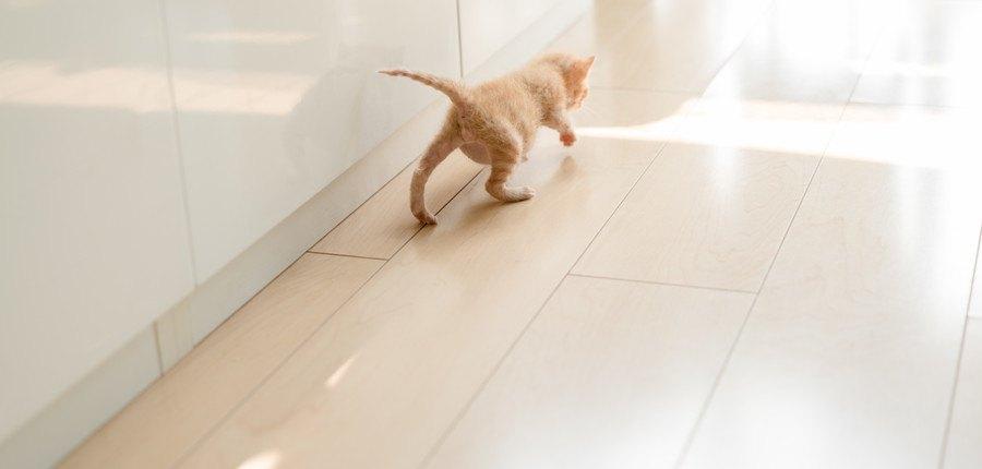 床を歩く猫