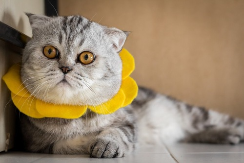 かわいい首輪の猫