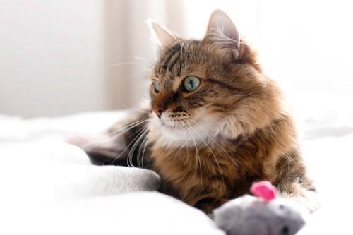 そっぽをむく猫
