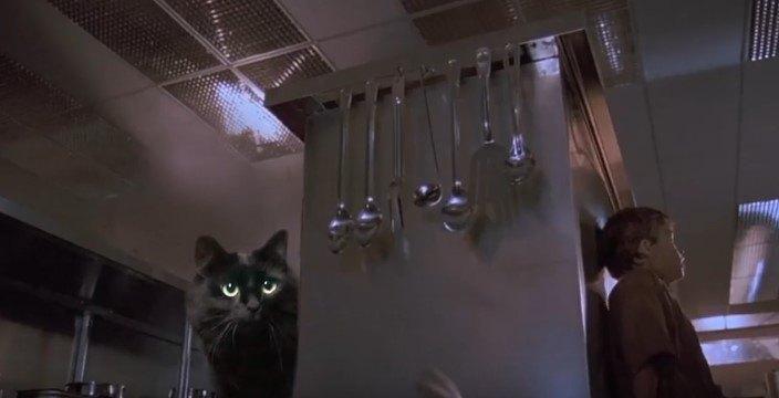 子供を探すアウル・キティ