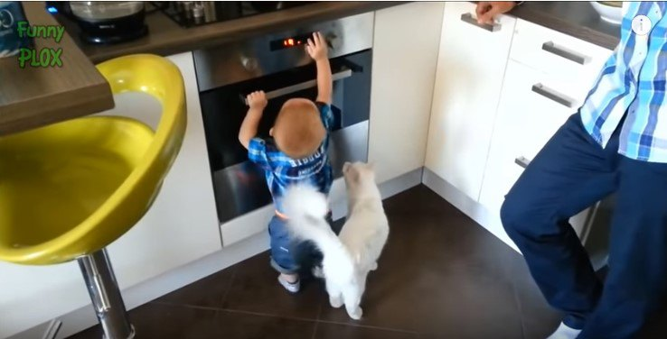 幼児の後ろに立つ猫