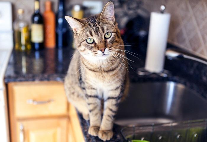 猫とキッチンイメージ