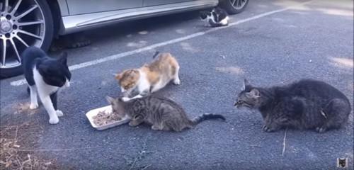 猫パンチをする茶白猫