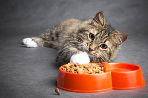 寝ながら餌を食べる猫
