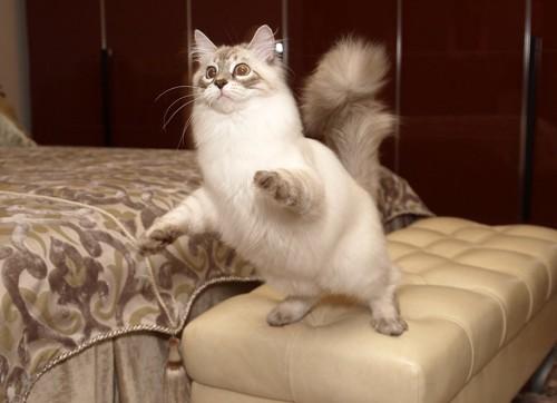 飛びつこうとしている猫