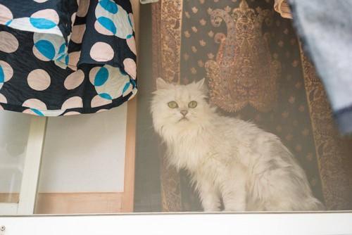網戸越しに外を見ている猫